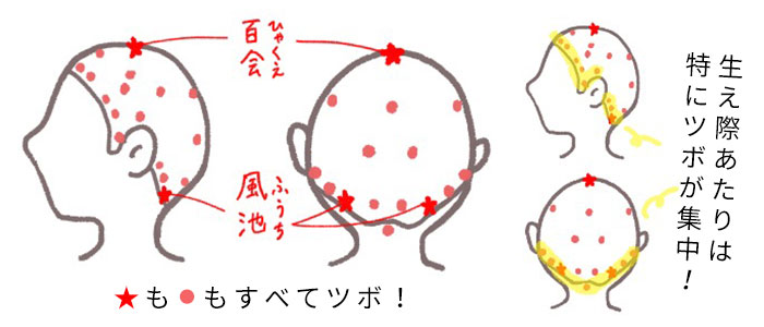 頭部には頂点にある「百会」や、後頭部の生え際にある「風池」などたくさんのツボがあります