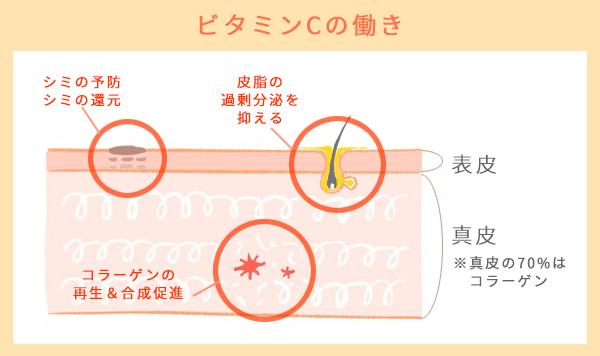 ビタミンCのマルチな効果を解説。1.コラーゲンをつくる・再生する2.シミ予防・シミ還元3.皮脂の過剰分泌を抑える
