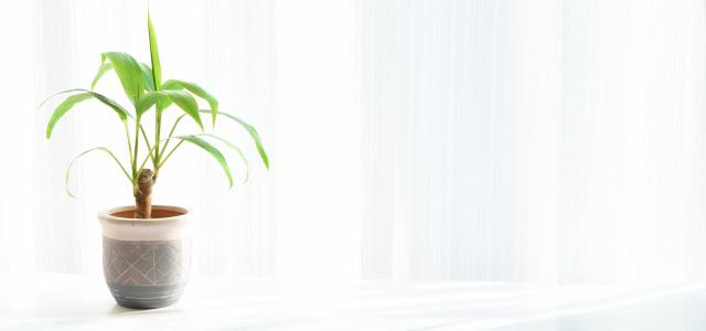 プロテオグリカンの効果①EGF作用